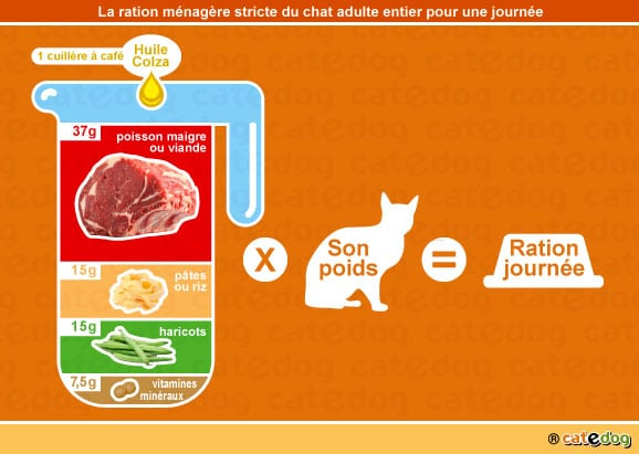alimentation-ration-menagere-chat-adulte-entier