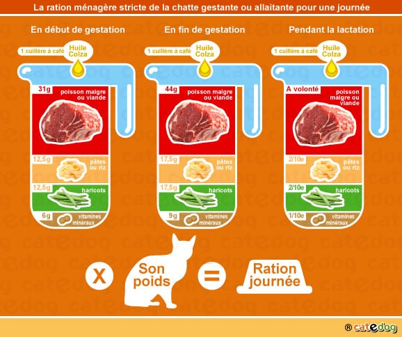alimentation-ration-menagere-chatte-gestation-lactation