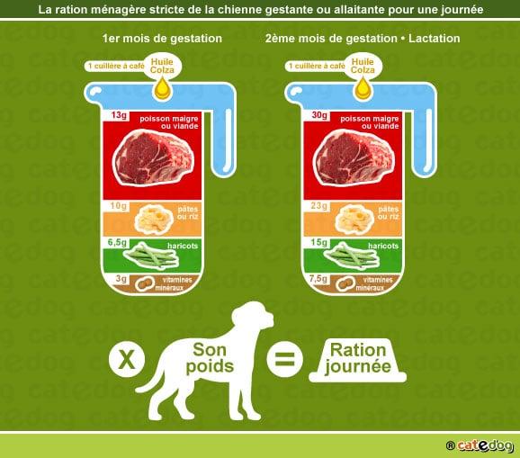 alimentation-ration-menagere-chienne-gestante-allaitante