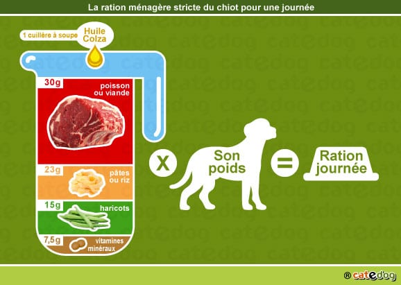alimentation-ration-menagere-chiot