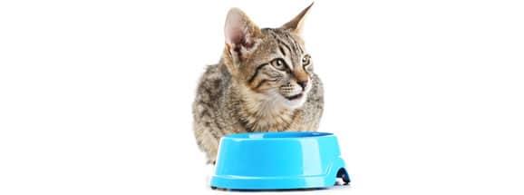 nourrir-un-chat-adulte
