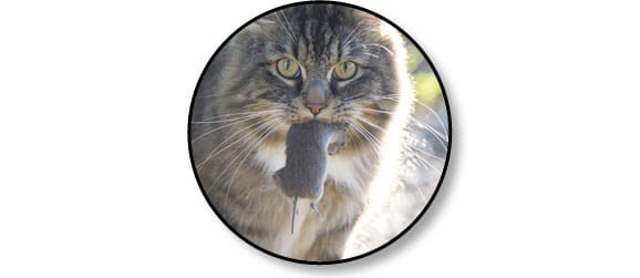 nourriture-alimentation-manger-proie-chat-souris
