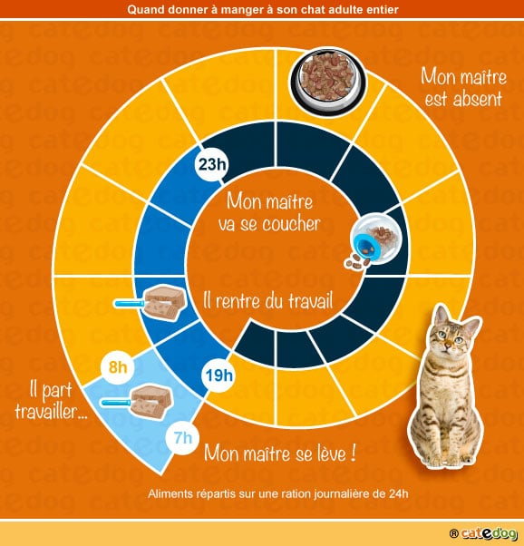 quoi-quand-donner-manger-a-son-chat-adulte