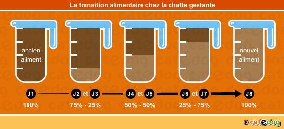 transition-alimentaire-repas-alimentation-nourrir-chatte-gestation