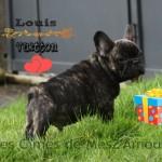 chien-bouledogue-francais-herbes