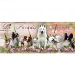chien-berger-blanc-suisse-epagneul-papillon
