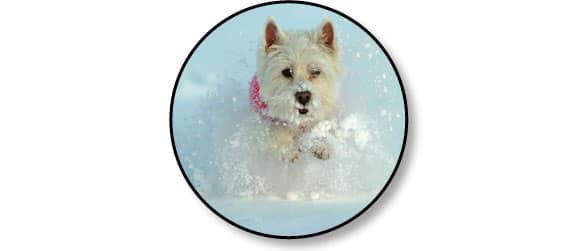 mettre-manteau-couvrir-habiller-chien-hiver-chien