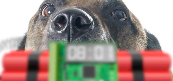 chien--bombe-terroriste