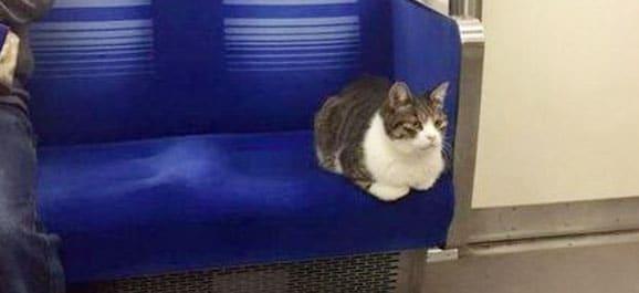 chat-metro-tokyo-japon_catedog.com