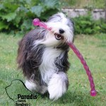 chien-bearded-collie-jouet