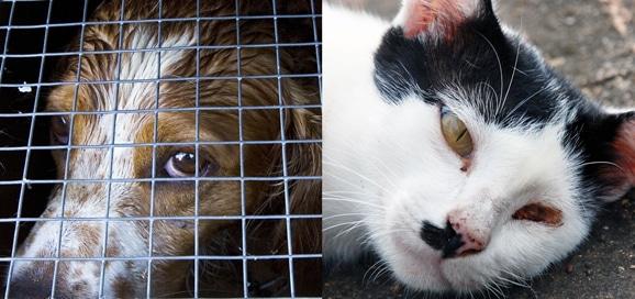 maltraitance-chien-chat-battu-tennessee-fbi_catedog.com_-1248x588