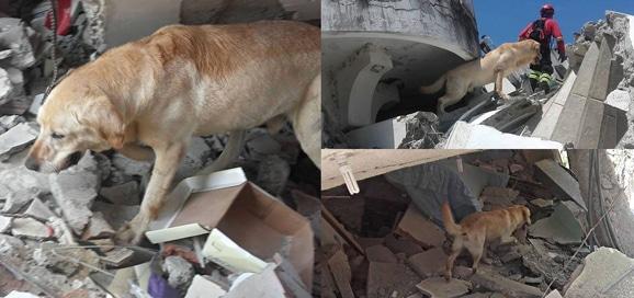 dayco-seisme_tremblement-de-terre_equateur_catedog.com