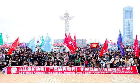 manifestation_festival_yulin_chien_catedog