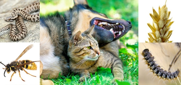 chenille-processionnaire_guepe_serpent_epillet_chien_chat_catedog
