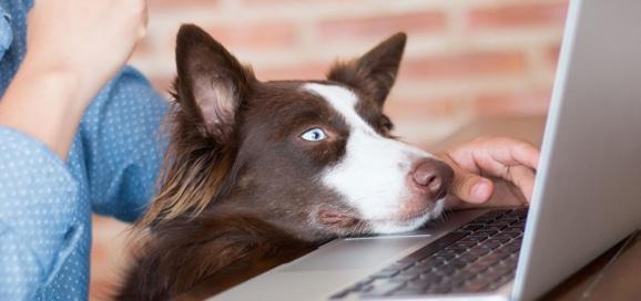 chien_travail_bureau_catedog