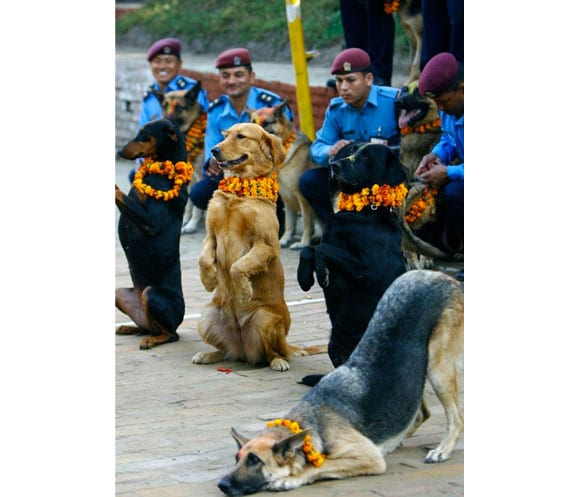 kukur-tihar_nepal_3_catedog