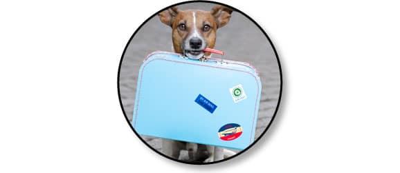 necessaire_valise_chien_voyage_catedog
