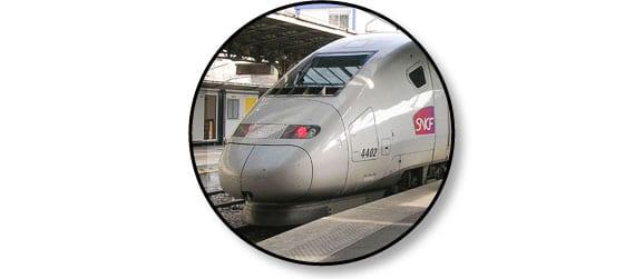 voyage_train_chien_chat_catedog