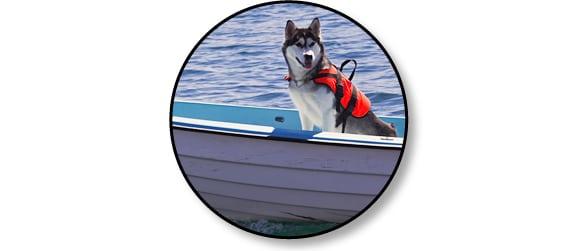 voyages_mer_bateau_chien