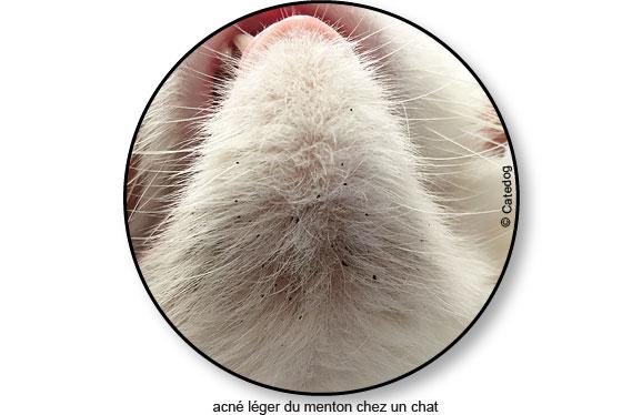 acne-leger-menton-peau-chat