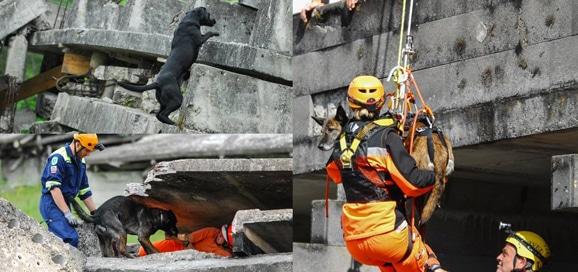 chien-de-sauvetage-monde_catedog-1248x588