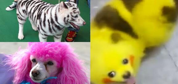 coloration-chien_pokemon-go_pikachu