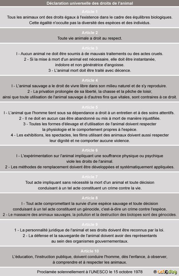 declaration-universelle-droits-animal_chien-chat_2