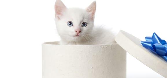 cadeau-chien-chat