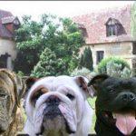 panorama-chiens-copie