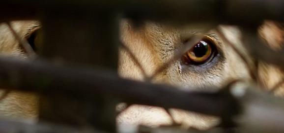 petition-manifeste-secretariat-etat-condition-animal