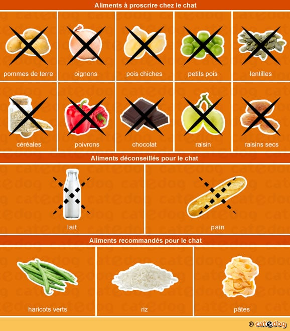 alimentation-aliments-toxiques-recommandes-chat