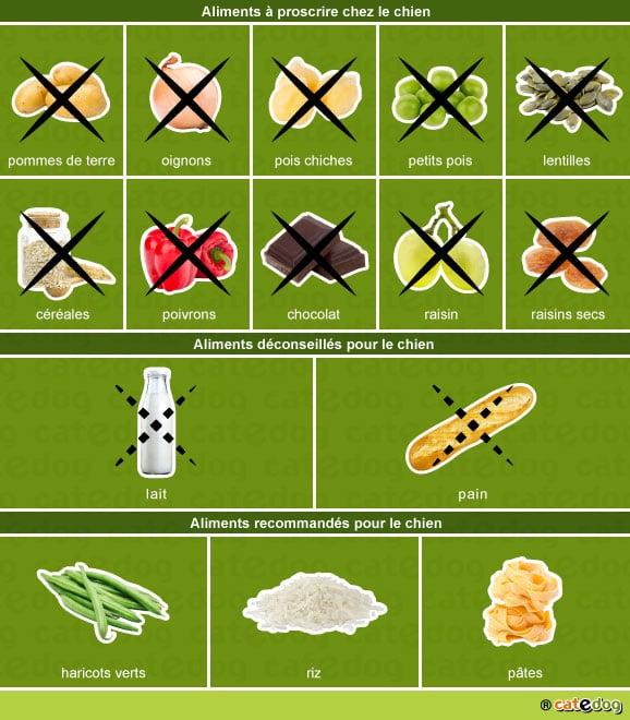 alimentation-aliments-toxiques-recommandes-chien