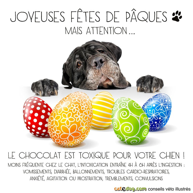 paques-oeufs-chien-chocolat-toxique
