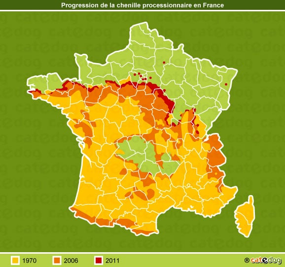 progression-chenille-processionnaire-france