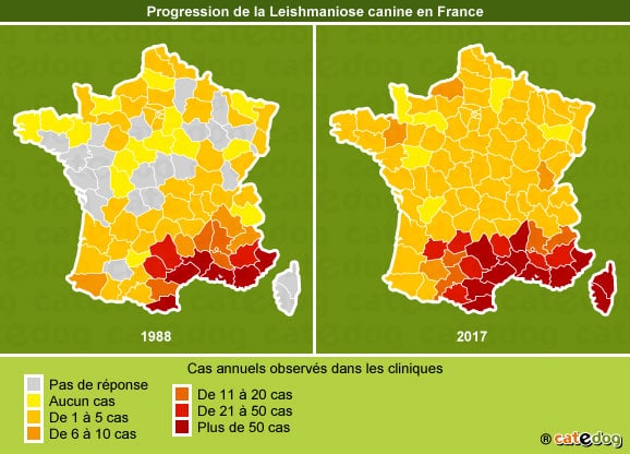 progression-leismaniose-canine-chien-france