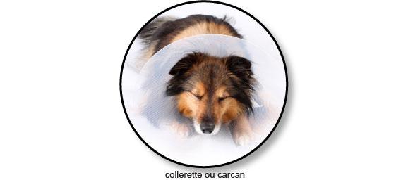 collerette-carcan-chien-conjonctivite-oeil
