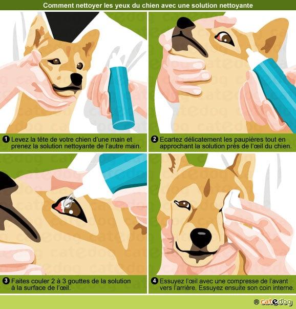 comment-nettoyer-oeil-yeux-conjonctivite-chien