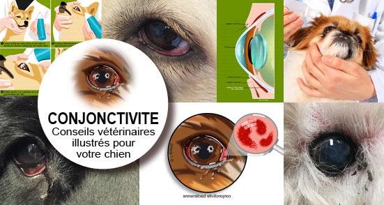 conjonctivite-oeil-yeux-rouge-pus-chien