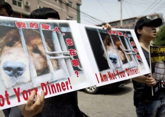 manifestation-yulin-festival-chine-chien