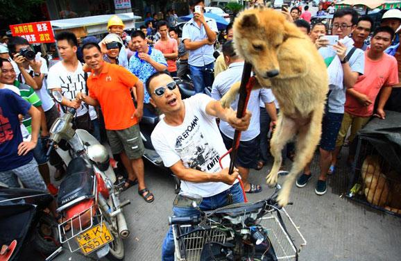 massacre-yulin-festival-chine-chien