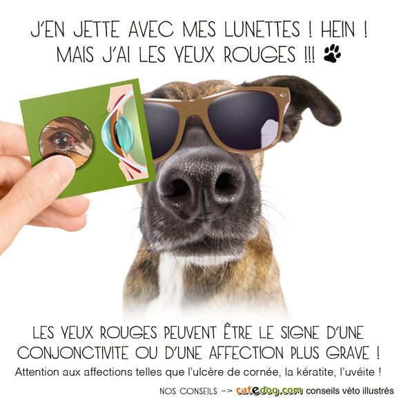 soigner-conjonctivite-oeil-rouge-chien