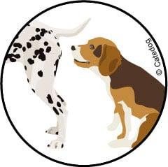 Glandes anales du chien