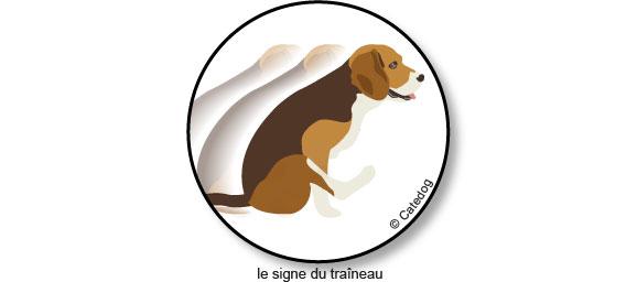 engorgement-glandes-anales-signe-du-traineau-chien