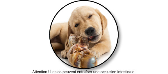 occlusion-intestinale-os-chien