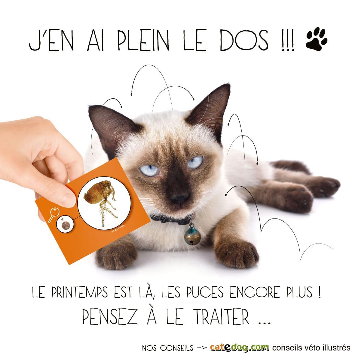 Traiter et traitement du chat contre les puces