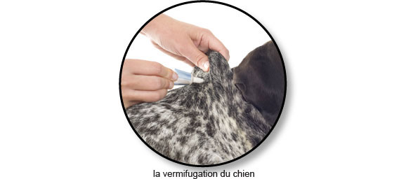 vermifuger-vermifugation-vermifuge-vers-puce-chien