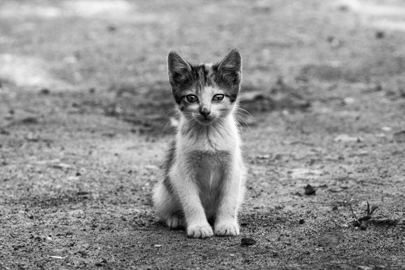 Image De Chat Et De Chien l'abandon, source de nombreuses souffrances pour l'animal