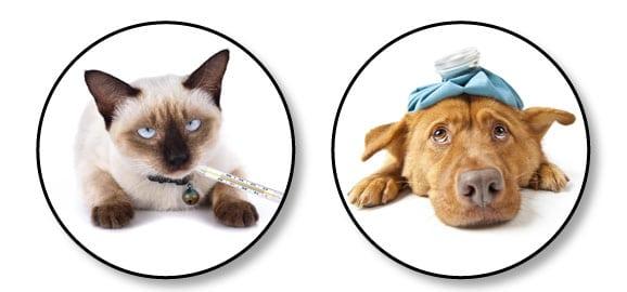 assurance-mutuelle-assurer-chien-chat