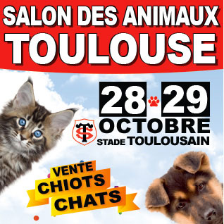 Salon des animaux de toulouse conseils v to illustr s catedog - Salon des animaux toulouse ...