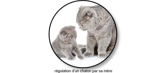 chat-chaton-mord-mordre-mordille-mordillement